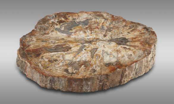 Mesa realizada con tronco fosilizado <br/>montada en acero<br/> Época Prehistórica
